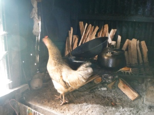 our kitchen chicken